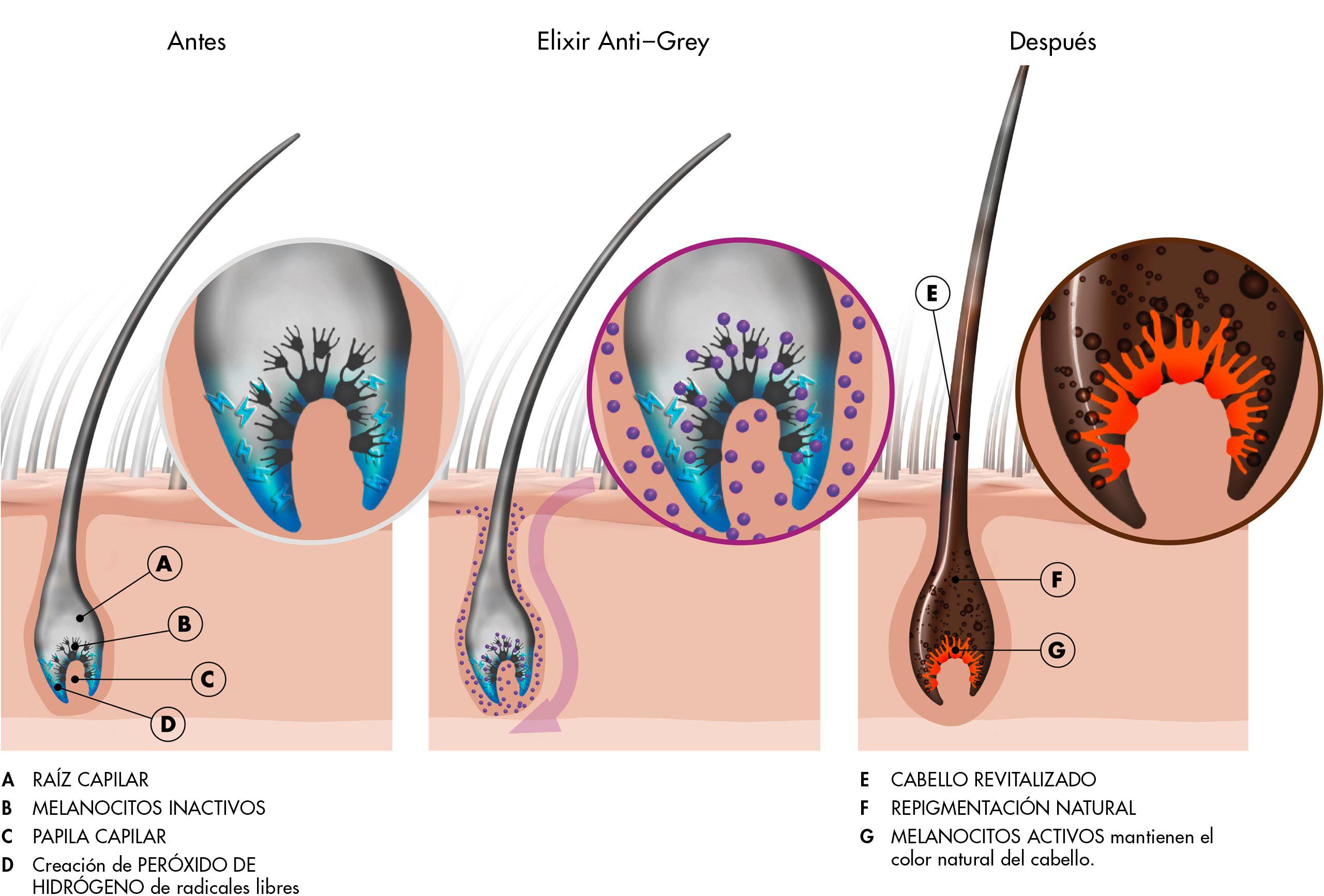 Antes y después de la aplicación de Elixir Anti-Grey